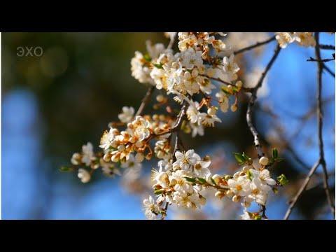 Весенняя прогулка по Житомиру. Часть-2 (Spring walk in Zhytomyr-2) 4К Ultra HD - Видео