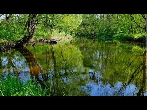 Весенняя прогулка по Житомиру - Часть 7 (Spring walk in Zhytomyr-7) 4К Ultra HD - Видео