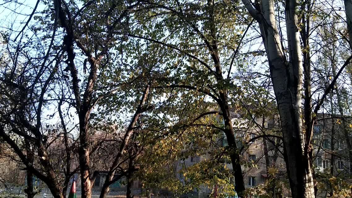 Листопад. Осень