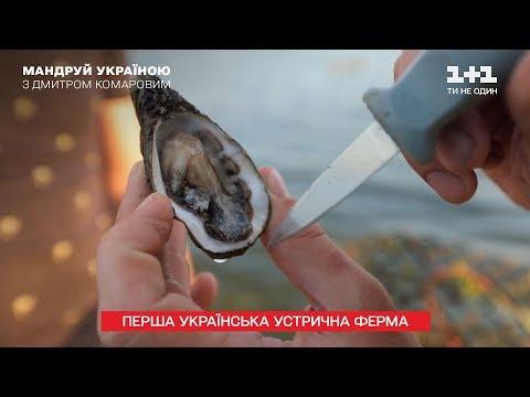 Первая украинская устричная ферма: почему устрицы для украинцев все еще деликатес