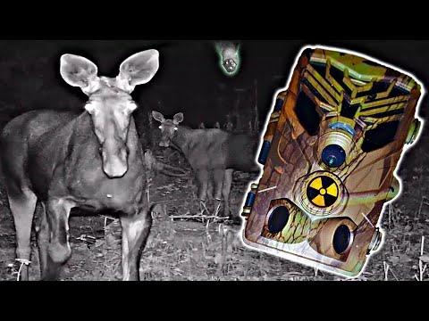 Что засняли ФотоЛовушки в Чернобыле Скрытое наблюдение за сталкерами в Припяти Ловим вандалов
