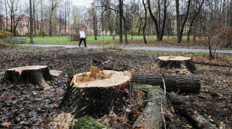 Рада намерена ужесточить наказание за уничтожение зеленых насаждений