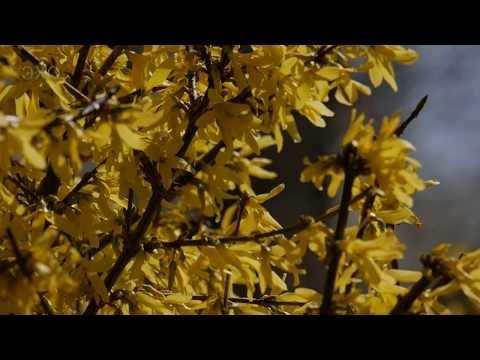 Весенняя прогулка по Житомиру (Spring walk in Zhytomyr) 4К Ultra HD - Видео
